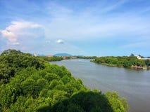 天空单独自由风可能mangroveforest美洲红树森林woodbride河保存新鲜绿色树的自然放松的观点 库存图片