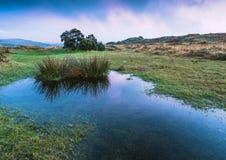 天空反射在狂放的池塘 库存照片