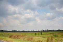 天空和云彩与Ricefield 库存照片