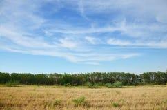 天空和云彩与Ricefield 免版税库存照片