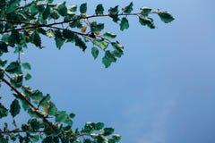 天空和叶子 免版税库存图片