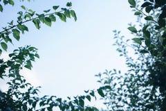 天空和叶子 库存图片