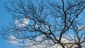 天空和树在日落 免版税图库摄影