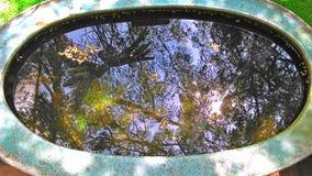 天空和树的反射在鱼池 免版税库存照片