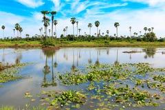天空和棕榈树的反射在小河水的 库存照片