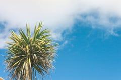 天空和棕榈树 奥克尼,苏格兰 免版税库存照片