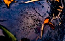 天空和死的tree2的反射 库存照片