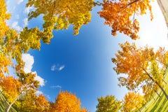 天空和秋天槭树在晴天 图库摄影
