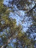 天空和绿色 库存图片