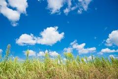 天空和草在秋天 免版税库存图片