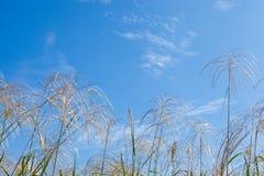 天空和草在秋天 库存照片