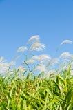 天空和草在秋天 免版税库存照片