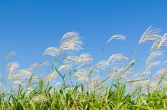 天空和草在秋天 免版税图库摄影