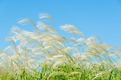 天空和草在秋天 库存图片