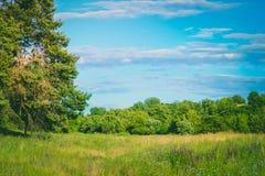 天空和草甸有一棵树的在夏天 免版税库存图片