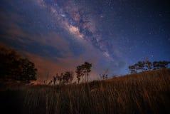 天空和草 库存图片