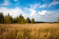 天空和领域在温暖的夏天 库存图片