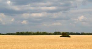 天空和麦子 免版税库存图片