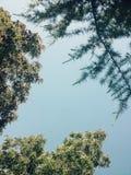 天空和结构树 库存照片