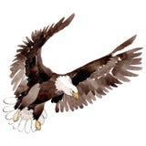 天空在水彩样式被隔绝的野生生物的鸟老鹰 背景,纹理,样式,框架 库存例证