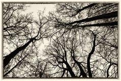 天空在莫斯科公园 库存图片