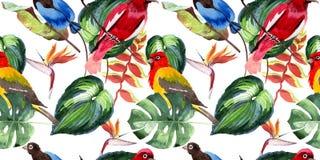 天空天堂鸟在野生生物的样式由水彩样式 皇族释放例证