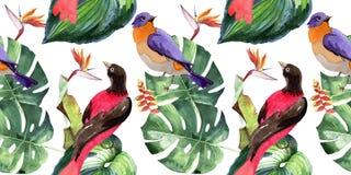 天空天堂鸟在野生生物的样式由水彩样式 库存例证