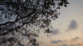 天空微明 库存照片