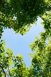 天空是在树之间的心脏 免版税库存照片