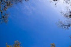 天空是蓝色和树分支的边缘  Heavenl 免版税库存照片