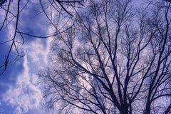 天空是风雨如磐的在树 免版税库存图片