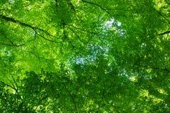 天空是绿色的 免版税库存图片