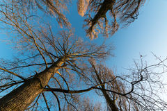 天空树 免版税库存图片