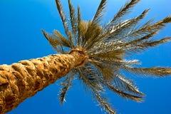 天空棕榈的帕尔马反对,在海滩的棕榈 明亮的自然颜色 免版税库存照片