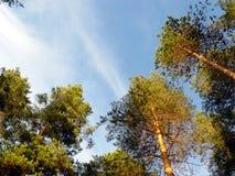 天空森林 免版税库存照片