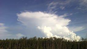 天空白色云彩美洲红树森林和木头桥梁 免版税库存照片