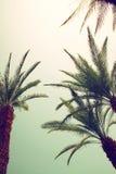 天空的棕榈树 夏天、假期和热带海滩conce 免版税库存图片