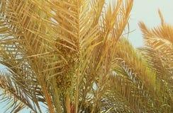 天空的棕榈树 棒图象夫人减速火箭的抽烟的样式 旅行、夏天、假期和热带海滩概念 免版税库存照片