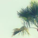 天空的棕榈树 棒图象夫人减速火箭的抽烟的样式 旅行、夏天、假期和热带海滩概念 库存图片