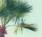 天空的棕榈树 棒图象夫人减速火箭的抽烟的样式 旅行、夏天、假期和热带海滩概念 免版税库存图片