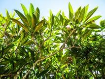 天空的植物 JPG 免版税库存图片