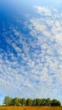天空的看法在桦树树丛上的 库存图片