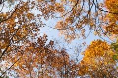 天空的看法通过树梢 免版税库存图片