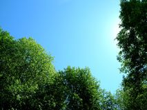天空结构树 免版税库存图片