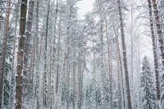 天空背景的斯诺伊森林  库存图片