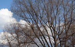 天空背景的森林 免版税库存图片