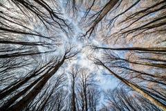 天空背景的森林 图库摄影