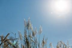 天空背景的美丽的植物 免版税库存图片