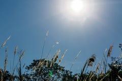 天空背景的美丽的植物 免版税库存照片