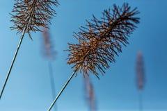 天空背景的美丽的植物 图库摄影